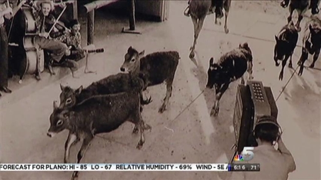 Animals In NBC 5's Studios!