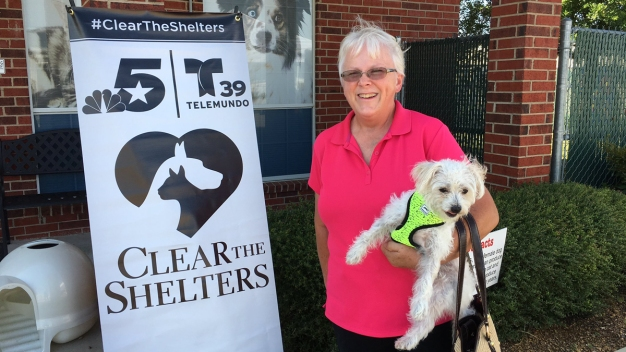 Clear the Shelters DFW: More Than 7,000 Pets Adopted