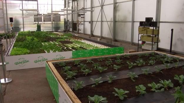 Inside Big Tex Urban Farms
