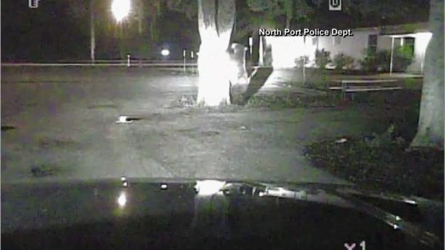 Dash Camera Records Bear Wandering Through Neighborhood