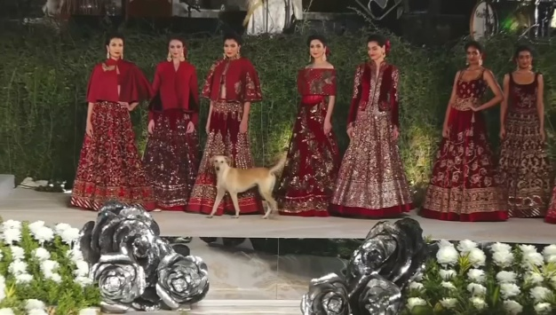Stray Dog Steals Fashion Show