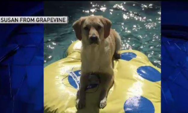 Dog Days of Summer: June 18