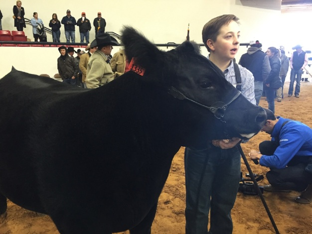 Stock Show Crowns 2016 Grand Champion Steer
