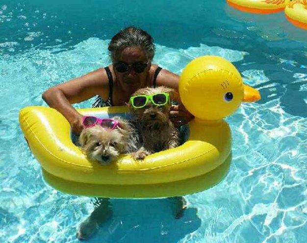 More Dog Days of Summer - July 25, 2016