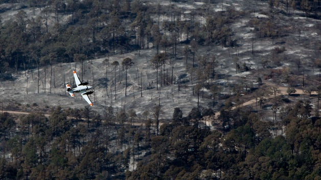 Volunteers Plant Trees in Fire-Ravaged Bastrop County