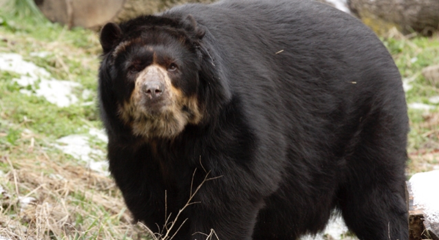 [DC] Fatter Than Your Average Bear