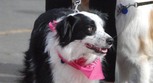 Pets for the Cure