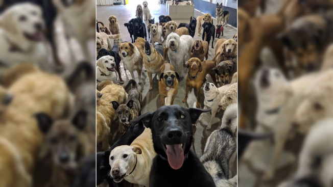 Pupper Portrait: Doggie Day Care Photo That Looks Like Group Selfie Goes Viral