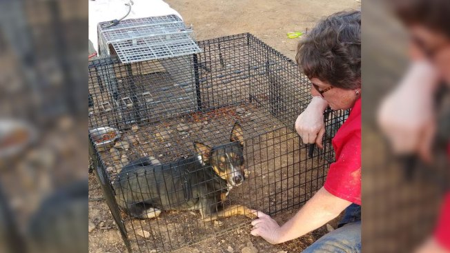 Months After California Wildfire, Pets and Owners Reunited