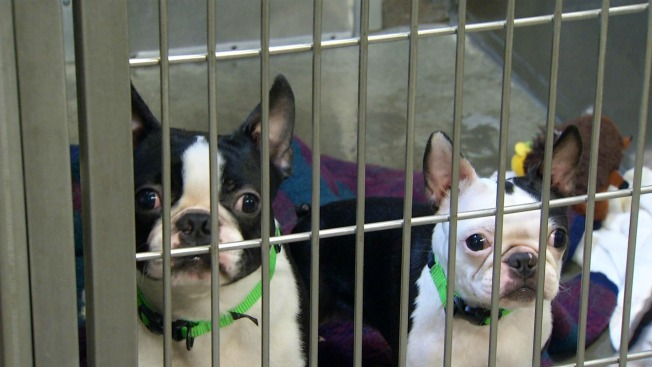 34 Dogs Saved From 'Deplorable' Conditions in Calif. Home