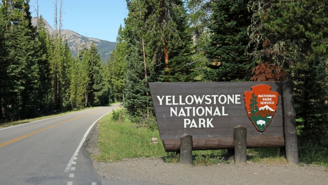 Bear Mauls 10-Year-Old at Yellowstone, Parents Drive It Away With Bear Spray