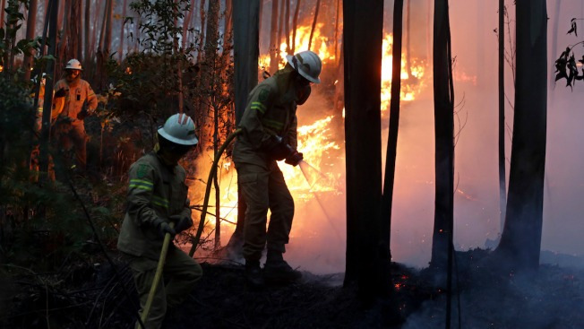 Raging Portugal forest fires kill dozens