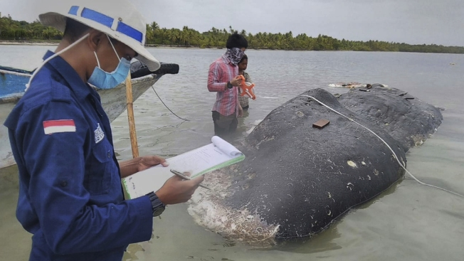 Dead Whale Had Eaten 13 Pounds of Plastic, Including 115 Cups