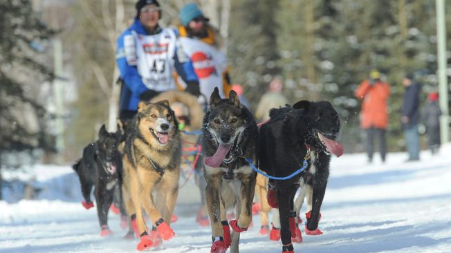 Defending Iditarod Champ Remains Self-Proclaimed 'Goofball'