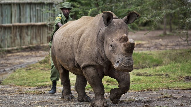 Only Four Northern White Rhinos Left on Earth