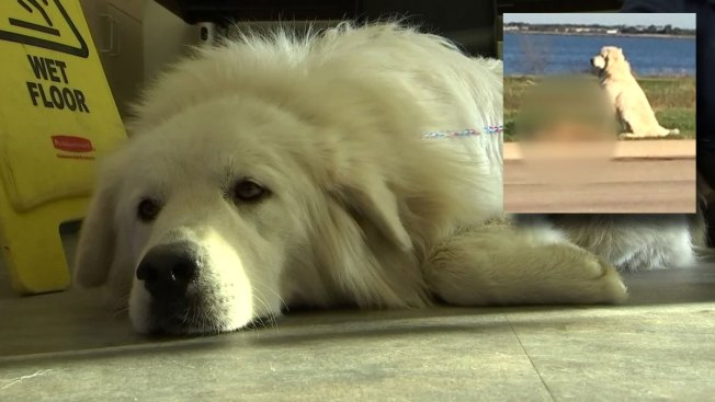 Owner of Dog Who Guarded Fallen Friend Found