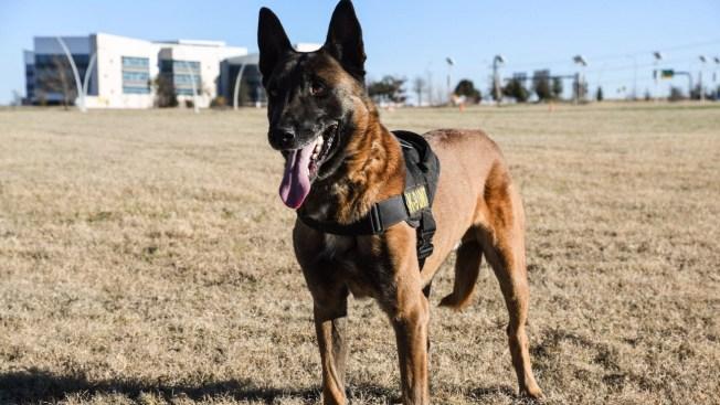 Grand Prairie K9 Officer Retires Wednesday