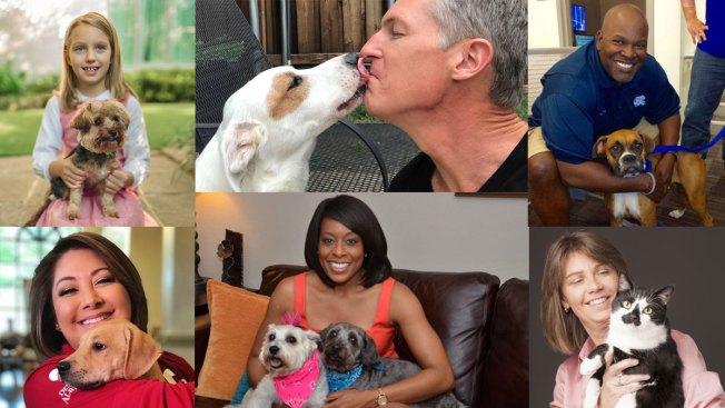 NBC 5 & Telemundo 39 Share Shelter Pet Love Stories