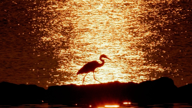 Scientists Predicting Record Dead Zone in Chesapeake Bay