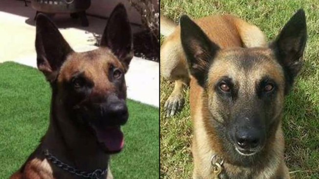 2 Police Dogs Chosen for AKC Paw Of Courage Awards