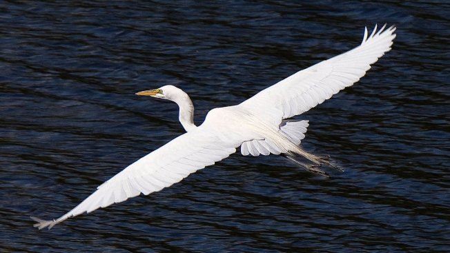 Wichita Falls Braces for Return of Pesky Egrets