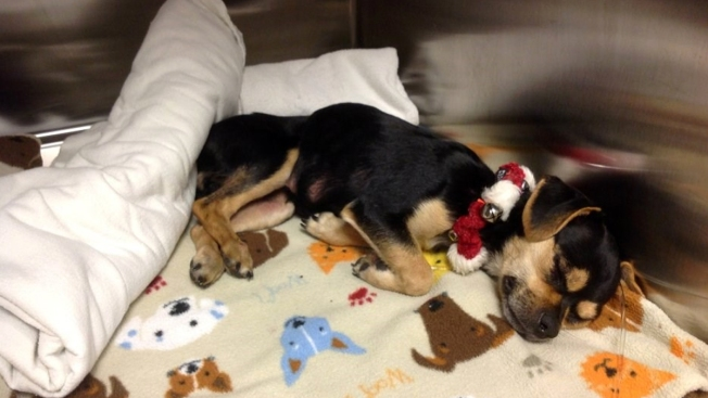 Rescue Group Seeks Help for Dog Left in Dumpster