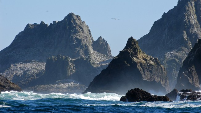California Asks US to End Plan to Drop Rat Poison on Islands