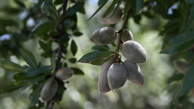 India Tariffs Threaten California Almond Industry