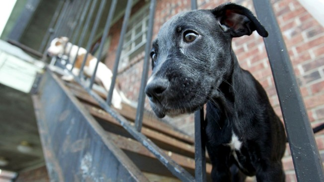 California Could Become First State to Ban Puppy Mills