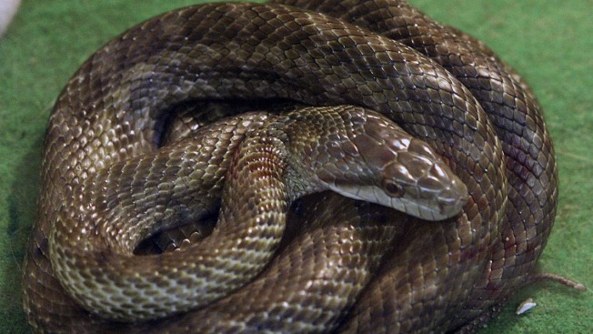 Police Remove 3-Foot-Long Snake from Texas Bathtub