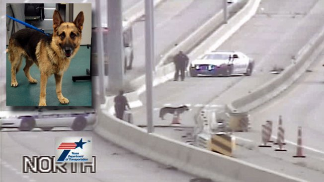 Raffle to be Held for Rescued HOV Lane Dog