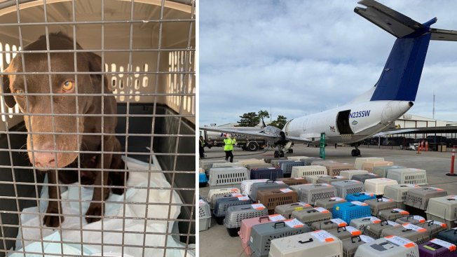 More Than 100 Dogs From Humane Soceity of North Texas Flown to Wisconsin