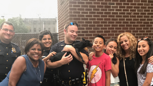 NBC Reporter, Boy, Cops Save Dog Darting Through NJ Street
