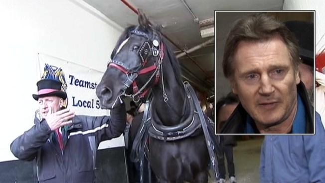 Carriage Horse Foes Picket Liam Neeson's Manhattan Building