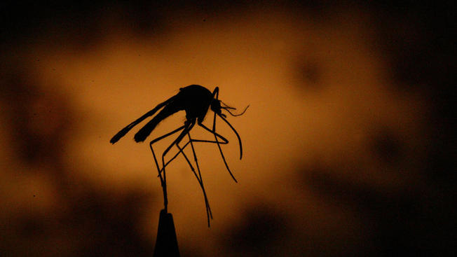 Tarrant County Reports First Human Case of West Nile Virus of the Year