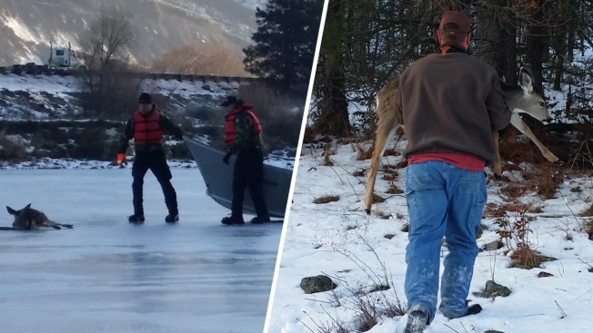 Young Deer Rescued From Frozen Pond By Oregon State Troopers