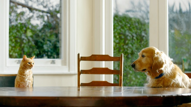 6 Things To Do Before Your Rescue Pet Arrives