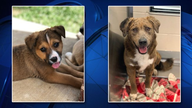 Nearly 90 Dogs to Fly From North Texas to East Coast