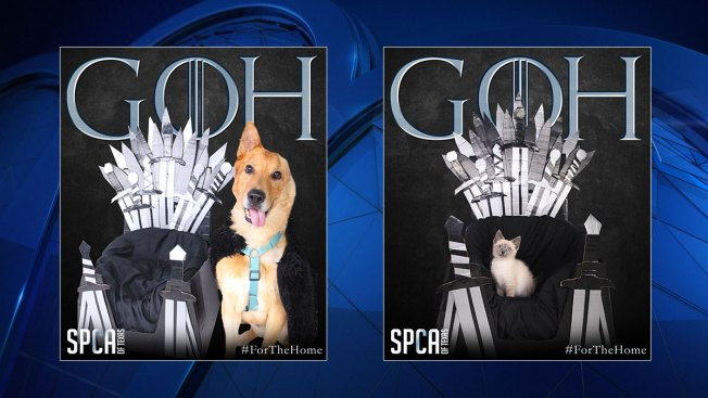 SPCA of Texas has 'Game of Homes' Adoption Special for Games of Thrones