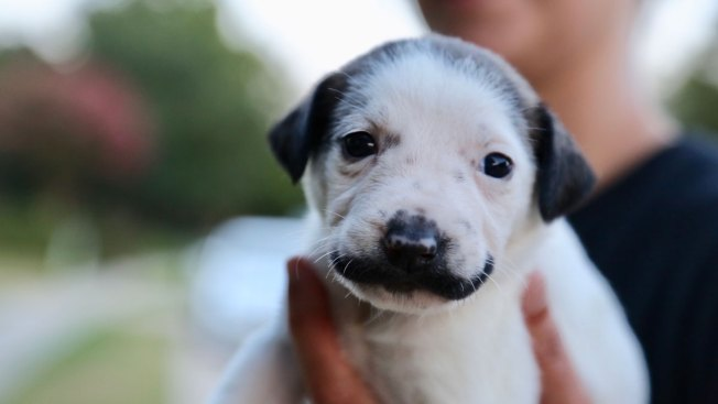 People Are Falling in Love With This Dallas Mustached Puppy