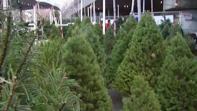 free christmas trees handed out saturday night