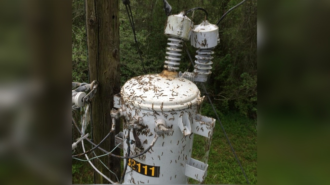 Tent Caterpillars Cause Power Outages in East Texas