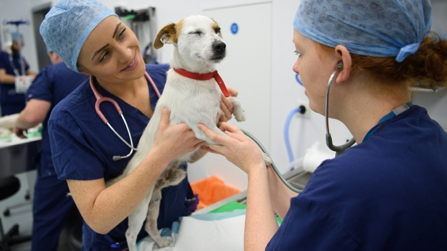 Walmart Is Opening Dozens of Veterinary Clinics in Its Stores and Launching an Online Pet Pharmacy