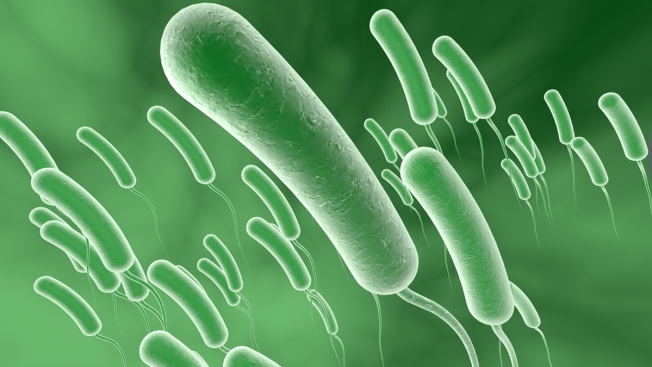 an investigation of vibrio cholera