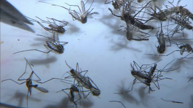 CDC Issues Brownsville Warning for Pregnant Women After Zika