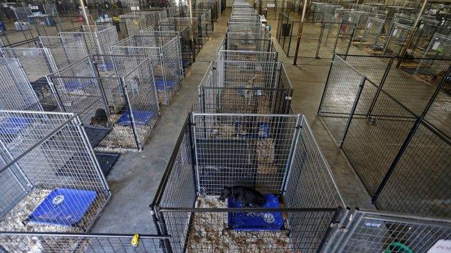Former Shelter Dog Helps Save Girl, 3, Left Naked and Alone