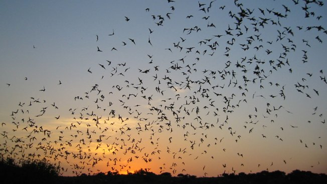 Bat Colony Found at Air Force Dorm in Texas
