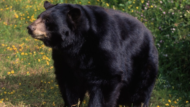 84-Year-Old Man Living in Calif. Hills Fights Off Bear