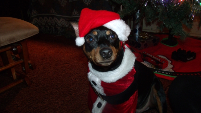 Sounds of the Season: Auditory Animal Abuse