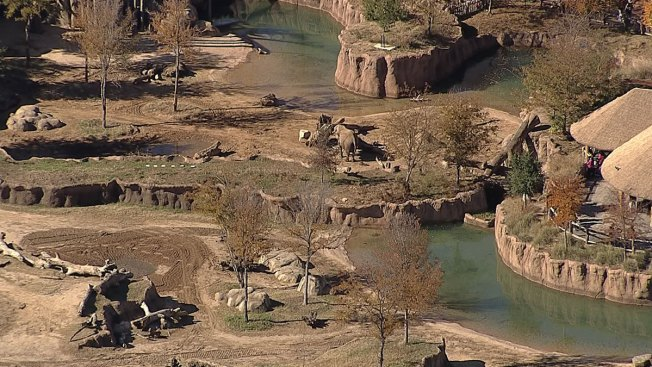 Dollar Day at the Dallas Zoo Wednesday